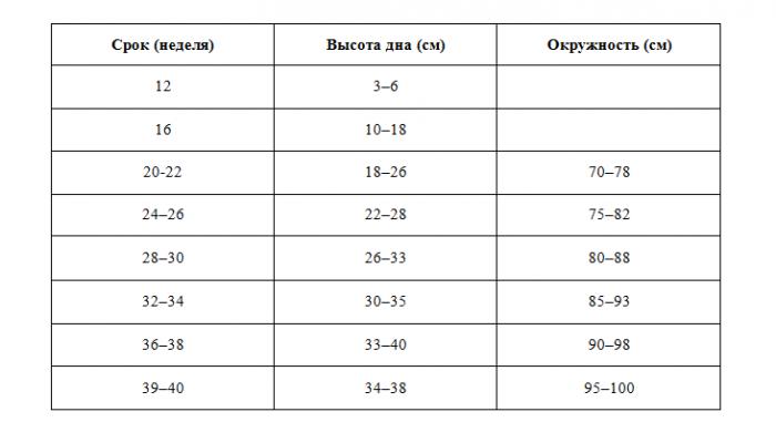 Размер живота по неделям беременности в сантиметрах