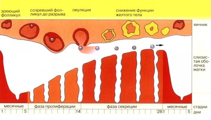 Розовые выделения: перед и после месячных, после секса, оранжевые, желтые, слизистые