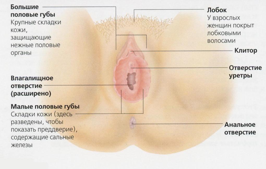 гинекология размер влагалища