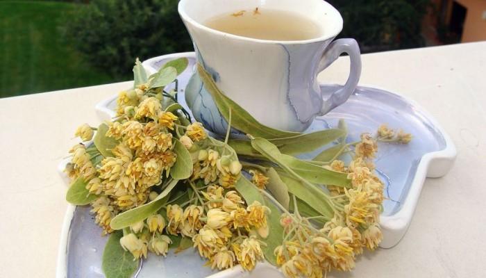 tiliae-cordate-medical-linden-flower-linden-blossom