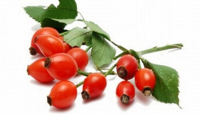 Plody-shipovnika-Svojstva-i-primenenie