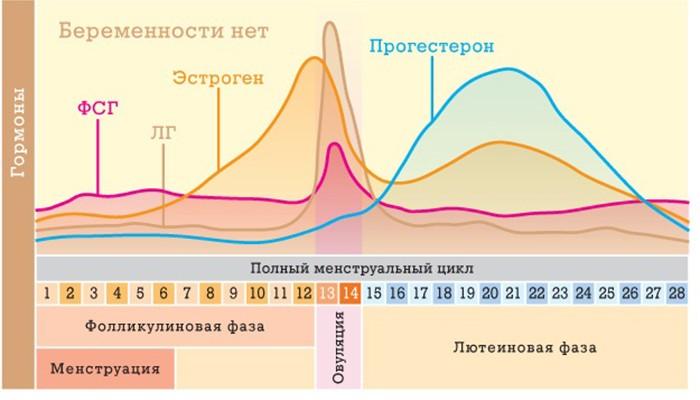pozdnyaya-ovulyaciya-zaderzhka-4